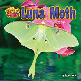 Cover: Luna Moth