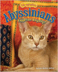 Cover: Abyssinians: Egyptian Royalty?