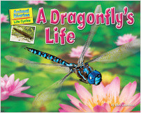 Cover: A Dragonfly's Life