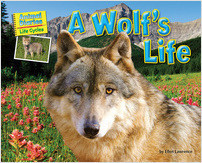 Cover: A Wolf's Life