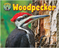 Cover: Woodpecker