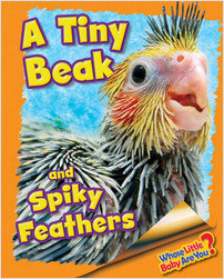Cover: A Tiny Beak and Spiky Feathers (Cockatiel)