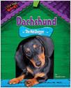 Cover: Dachshund