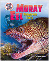 Cover: Moray Eel