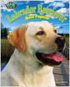 Cover: Labrador Retriever