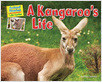 Cover: A Kangaroo's Life