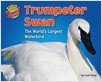 Cover: Trumpeter Swan