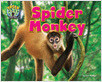 Cover: Spider Monkey