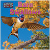 Cover: Barn Swallows