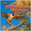 Cover: Las golondrinas comunes (Barn Swallows)