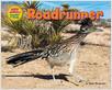 Cover: Roadrunner