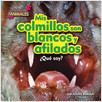Cover: Mis colmillos son blancos y afilados (My Fangs Are White and Sharp)