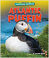 Cover: Atlantic Puffin