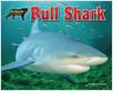 Cover: Bull Shark