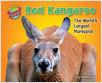 Cover: Red Kangaroo