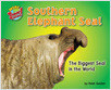 Cover: Southern Elephant Seal