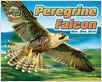 Cover: Peregrine Falcon