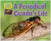 Cover: A Periodical Cicada's Life