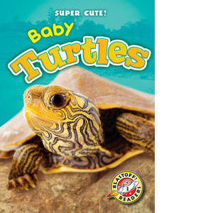 Cover: Baby Turtles
