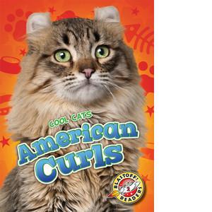 Cover: American Curls