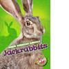 Cover: Jackrabbits