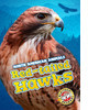 Cover: Red-tailed Hawks