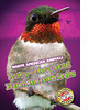 Cover: Ruby-throated Hummingbirds
