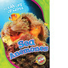 Cover: Sea Anemones