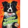 Cover: Border Collies