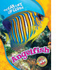 Cover: Angelfish