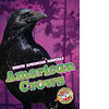 Cover: American Crows