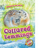 Cover: Collared Lemmings