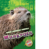 Cover: Muskrats