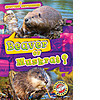 Cover: Beaver or Muskrat?