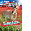 Cover: Pronghorn
