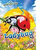 Cover: Animal Life Cycles: Ladybug