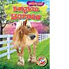 Cover: Belgian Horses