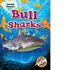 Cover: Bull Sharks