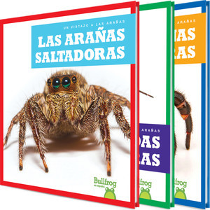 Cover: Un vistazo a las arañas (An Eye on Spiders)