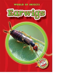 Cover: Earwigs