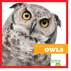 Cover: Owls