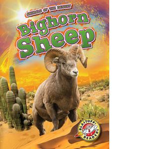 Cover: Bighorn Sheep