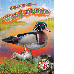 Cover: Wood Ducks