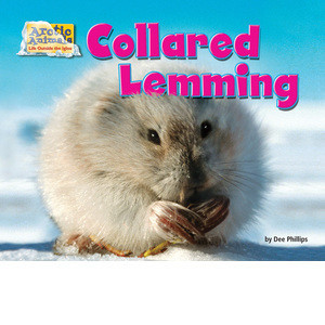 Cover: Collared Lemming