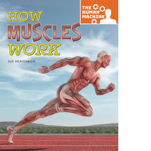 Cover: How Muscles Work