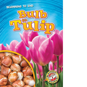 Cover: Bulb to Tulip