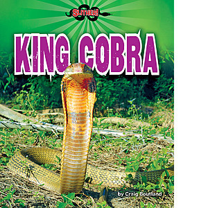 Cover: King Cobra