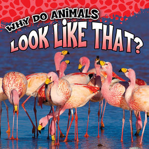 Cover: Why Do Animals Look Like That?