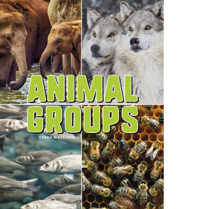 Cover: Animal Groups