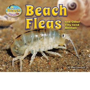 Cover: Beach Fleas and Other Tiny Sand Animals